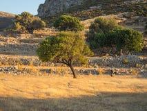 Een boom bij zonsondergang, Tilos-eiland Stock Foto