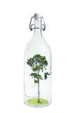Een boom binnen glasfles, abstract die concept besparingen een aard, op witte achtergrond wordt geïsoleerd Stock Foto's