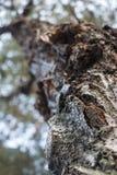 Een boom in de close-up stock foto's
