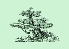 Een boom in de stijl van een bonsai Oude gebogen boomstam Natuurlijke vectorsamenstelling Stock Afbeelding