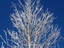 Een boom in de de winterochtend stock foto's