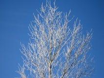 Een boom in de de winterochtend stock foto