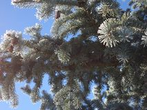 Een boom in de de winterochtend stock afbeelding