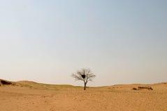 Een boom in de woestijn Stock Foto
