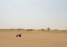 Een boom in de woestijn Royalty-vrije Stock Afbeeldingen