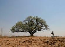 Een boom in de woestijn Royalty-vrije Stock Afbeelding