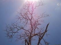 Een boom in de zon stock fotografie