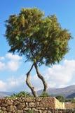 Een boom dichtbij het strand Royalty-vrije Stock Afbeelding