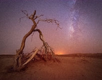 Een boom die in de droge Arabische woestijn steunen Stock Fotografie