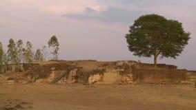Een boom die de oude ruïnes bewaken stock footage