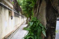 Een boom die door installaties wordt behandeld royalty-vrije stock foto