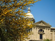 Een boom die met gele bloemen op een de bouwachtergrond bloeien in Royalty-vrije Stock Fotografie