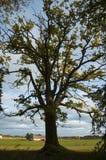 Een boom die uit uitspreiden Royalty-vrije Stock Afbeeldingen