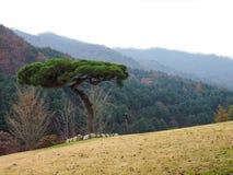 Een boom die zich alleen op het grasgebied bevinden Royalty-vrije Stock Fotografie