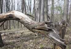 Een boom door de wind wordt verdraaid die royalty-vrije stock foto's