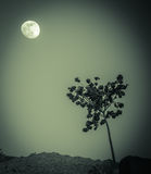 Een boom en de maan stock fotografie