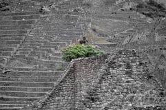 Een boom en de stenen Stock Foto