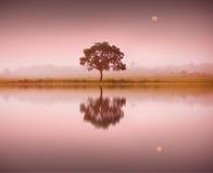 Een boom en een maan Stock Foto's