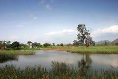 Een boom en een plattelandshuisje Stock Fotografie