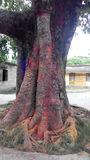 Een boom in heilig festival wordt gekleurd dat Stock Fotografie