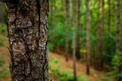 Een boom in het bos van Schoorl in Nederland Stock Foto's