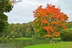 Een boom in het herfstkledingstuk Stock Afbeelding
