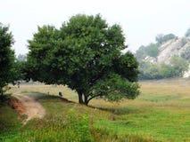 Een boom in het ravijn royalty-vrije stock afbeelding