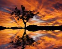 Een boom in meer wordt weerspiegeld dat Stock Foto's