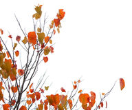 Een boom met dalingsbladeren stock afbeelding