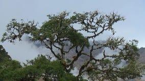 Een boom met de bladeren en de takken stock footage