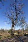 Een boom met een bank in de manor Manor Olenins Priyutino Vsevolozhsk De winter Royalty-vrije Stock Afbeeldingen