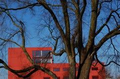 Een boom met een bureaugebouw Royalty-vrije Stock Afbeeldingen