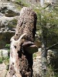 Een boom met een paddestoel Stock Afbeeldingen
