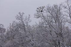 Een boom met sneeuw wordt behandeld die… denk ik wonderfull is stock foto's