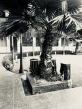 Een boom met trommels eronder stock foto