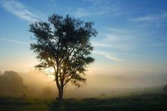 Een boom is in mist Stock Afbeelding