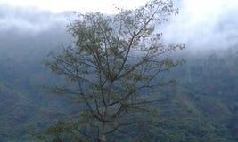 Een boom in mistig bewolkt weer in heuvelposten royalty-vrije stock afbeelding