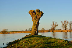 Een boom naast een rivier Royalty-vrije Stock Fotografie