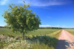 Een boom naast een weg Stock Afbeelding