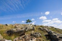 Een boom op bovenkant Royalty-vrije Stock Foto's