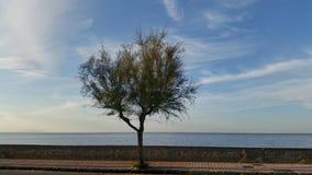 Een boom op de straat Royalty-vrije Stock Foto