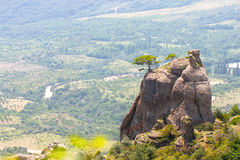 Een boom op een berg royalty-vrije stock fotografie