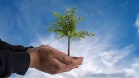 Een boom op hand Stock Foto
