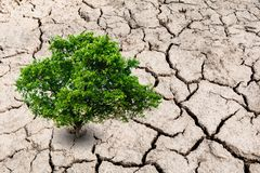 Een boom op troosteloos land Boom op droge aarde, ecologieramp royalty-vrije stock afbeeldingen