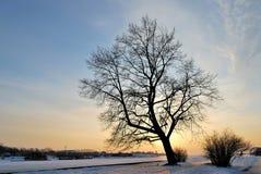 Een boom tegen de zonsondergang royalty-vrije stock afbeelding