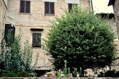 Een boom in Toscanië Stock Foto's