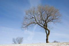 Een boom zonder bladeren Stock Fotografie