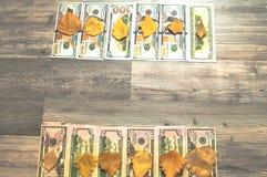 Een boomachtergrond, heel wat Amerikaanse dollars Stock Foto's