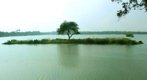 Een boombezinning over het landelijke meerwater Stock Afbeeldingen