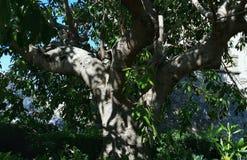 Een boomboomstam die door de zon wordt verlicht Stock Fotografie